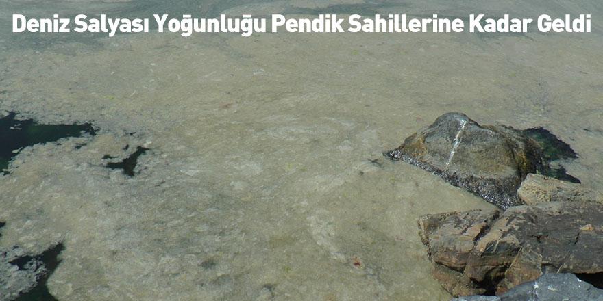 Deniz Salyası Yoğunluğu Pendik Sahillerine Kadar Geldi