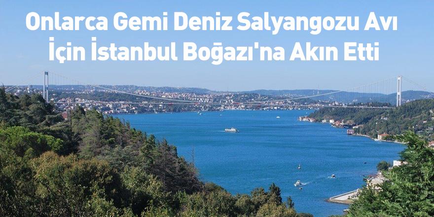 Onlarca Gemi Deniz Salyangozu Avı İçin İstanbul Boğazı'na Akın Etti