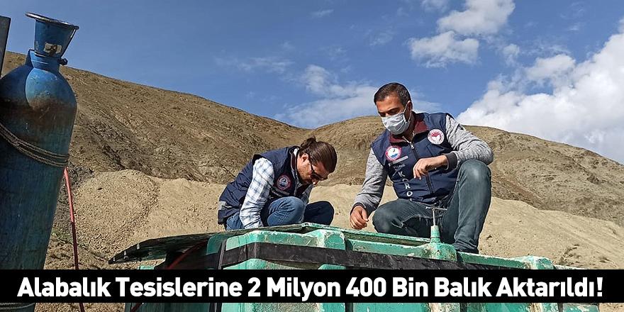 Alabalık Tesislerine 2 Milyon 400 Bin Balık Aktarıldı!