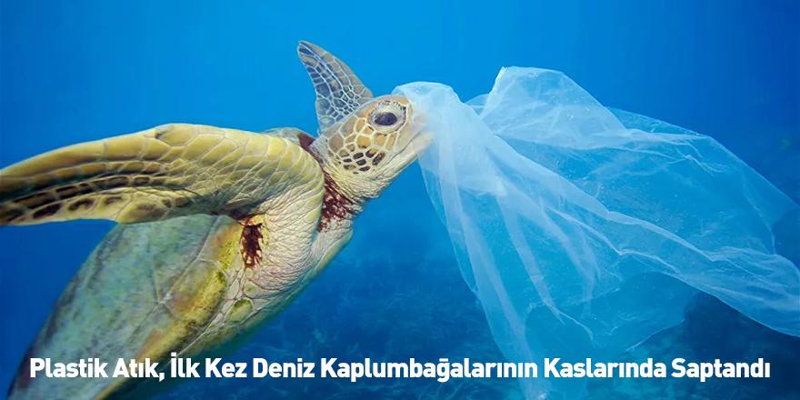 Plastik Atık, İlk Kez Deniz Kaplumbağalarının Kaslarında Saptandı
