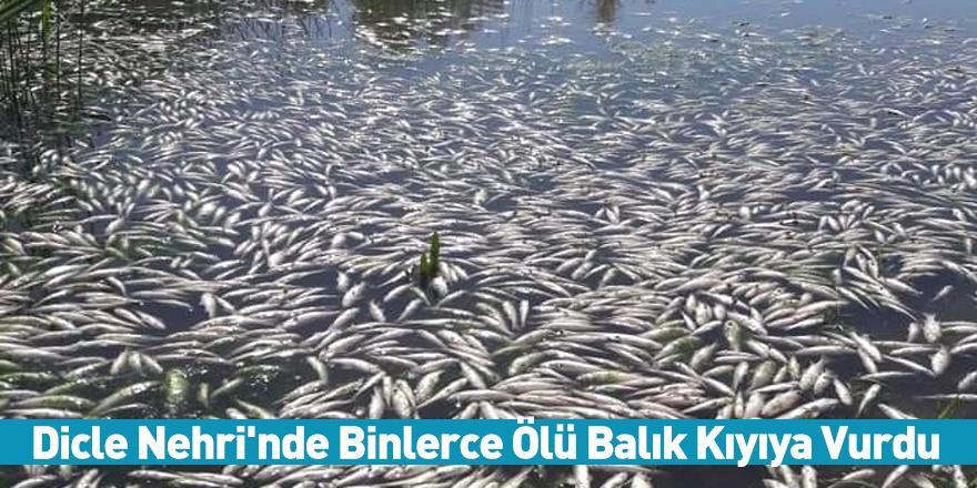 Dicle Nehri'nde Binlerce Ölü Balık Kıyıya Vurdu