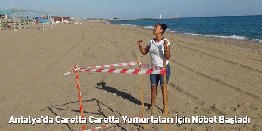 Antalya'da Caretta Caretta Yumurtaları İçin Nöbet Başladı