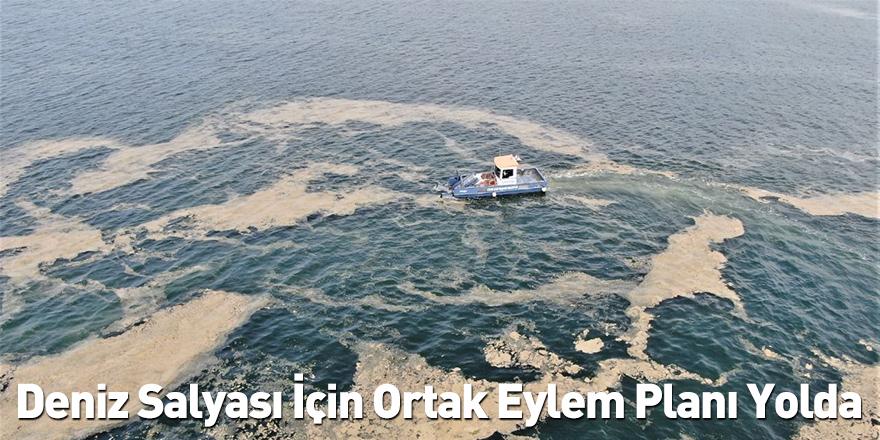 Deniz Salyası İçin Ortak Eylem Planı Yolda