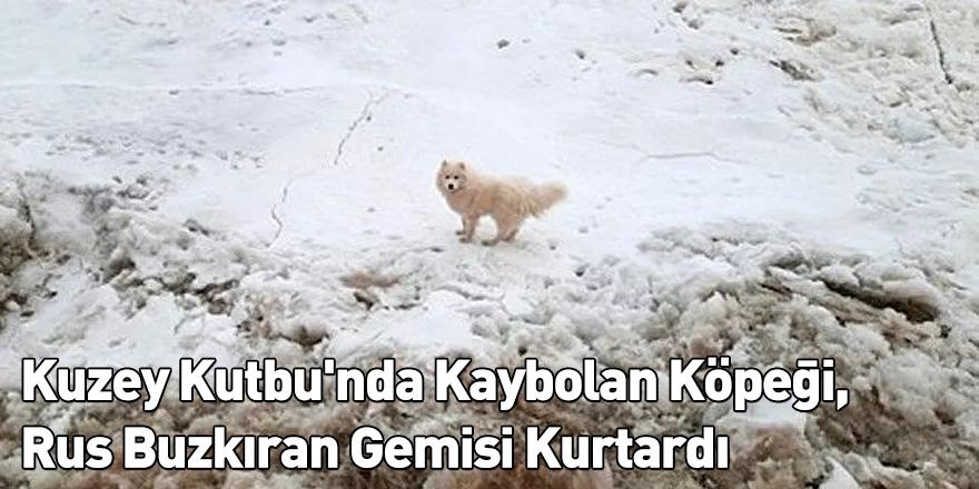 Kuzey Kutbu'nda Kaybolan Köpeği, Rus Buzkıran Gemisi Kurtardı