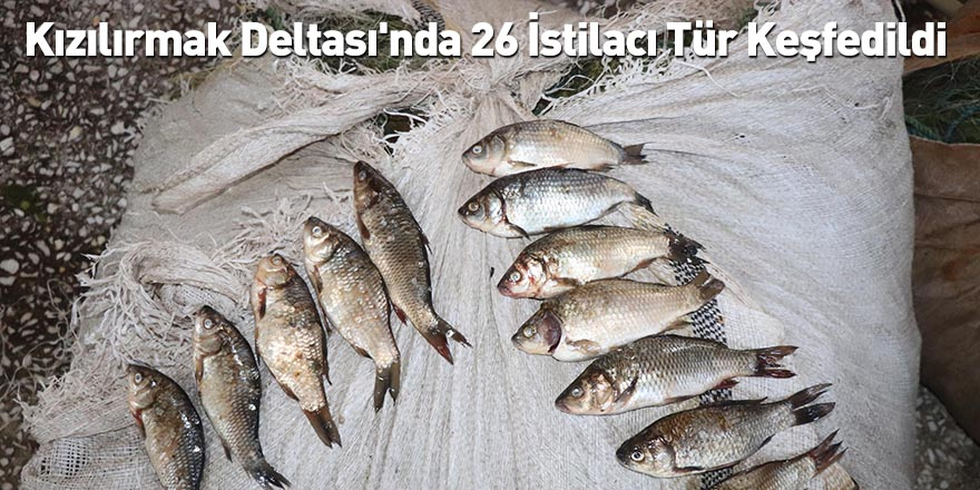 Kızılırmak Deltası'nda 26 İstilacı Tür Keşfedildi