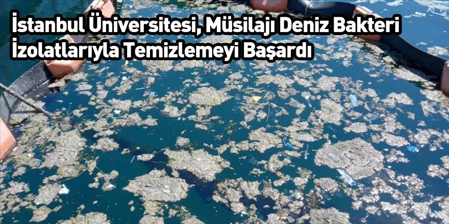 İstanbul Üniversitesi, Müsilajı Deniz Bakteri İzolatlarıyla Temizlemeyi Başardı