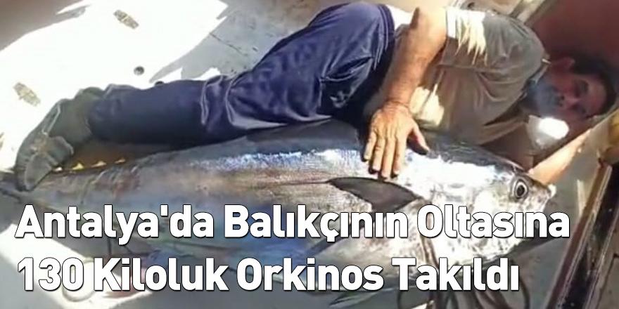 Antalya'da Balıkçının Oltasına 130 Kiloluk Orkinos Takıldı