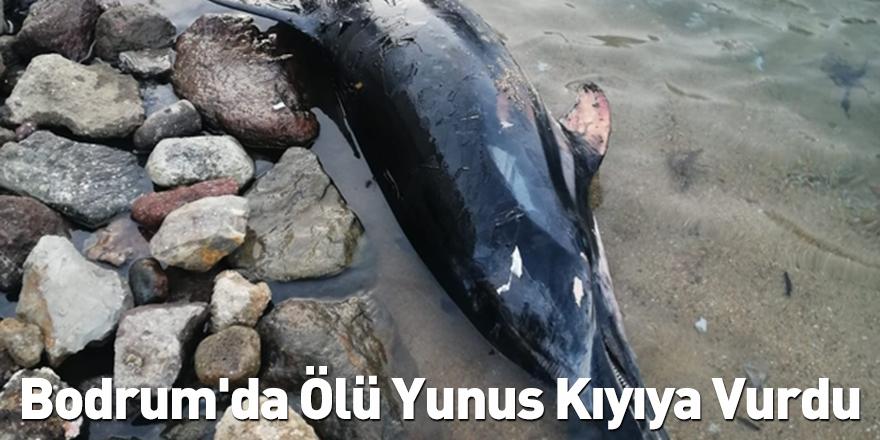 Bodrum'da Ölü Yunus Kıyıya Vurdu
