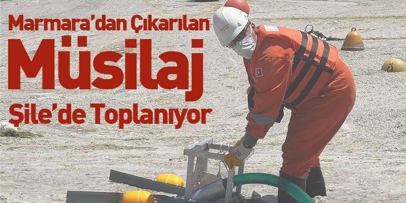 Marmara'dan Çıkarılan Müsilaj Şile'de Toplanıyor