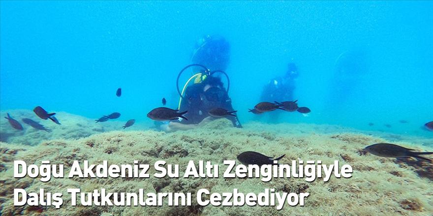 Doğu Akdeniz Su Altı Zenginliğiyle Dalış Tutkunlarını Cezbediyor