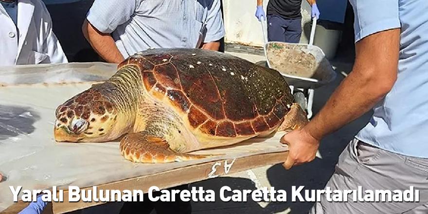 Yaralı Bulunan Caretta Caretta Kurtarılamadı