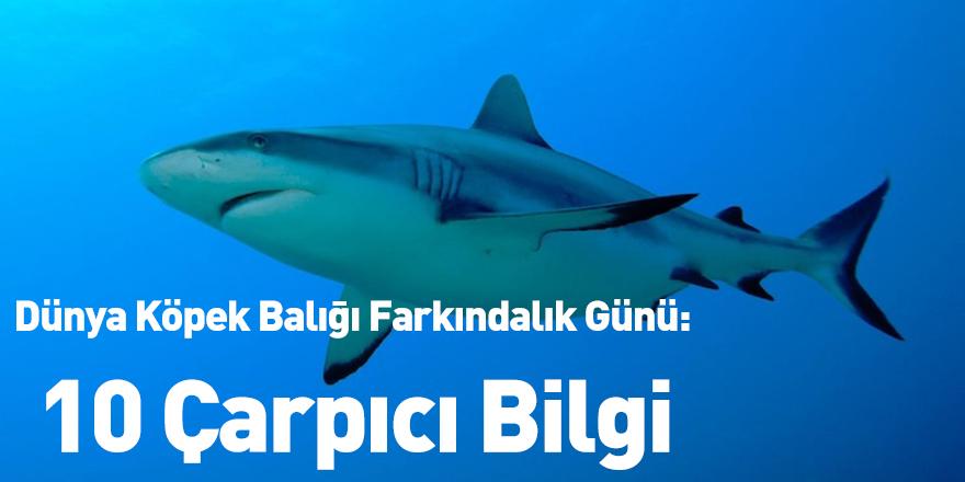 Dünya Köpek Balığı Farkındalık Günü: 10 Çarpıcı Bilgi