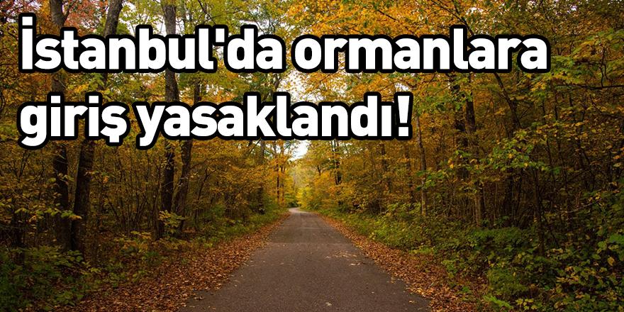 İstanbul'da ormanlara giriş yasaklandı!
