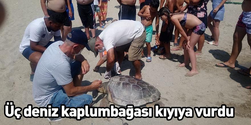 Üç deniz kaplumbağası kıyıya vurdu