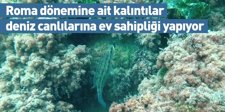 Roma dönemine ait kalıntılar deniz canlılarına ev sahipliği yapıyor
