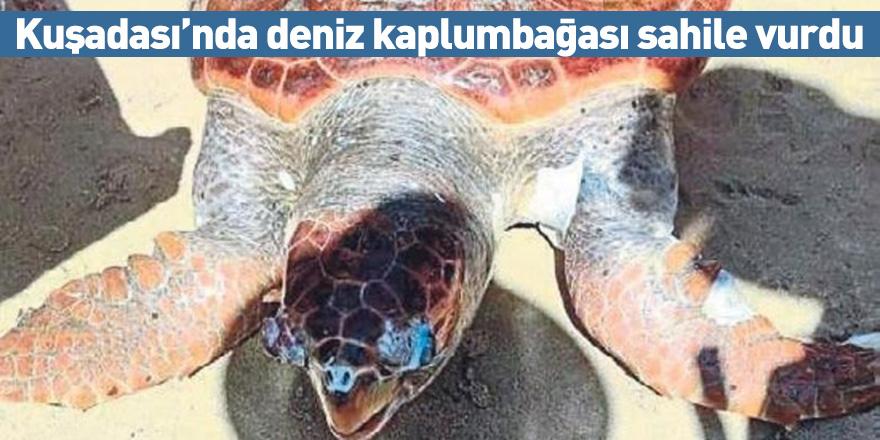 Kuşadası'nda deniz kaplumbağası sahile vurdu