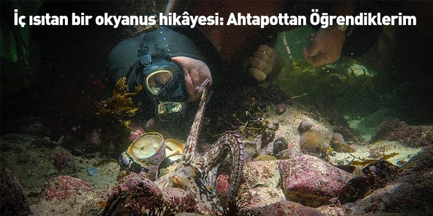 İç ısıtan bir okyanus hikâyesi: Ahtapottan Öğrendiklerim