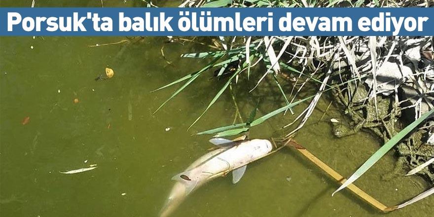 Porsuk'ta balık ölümleri devam ediyor