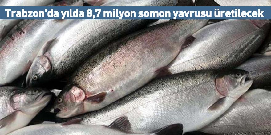 Trabzon'da yılda 8,7 milyon somon yavrusu üretilecek
