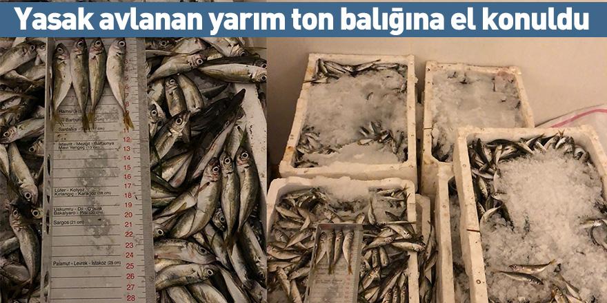 Yasak avlanan yarım ton balığına el konuldu