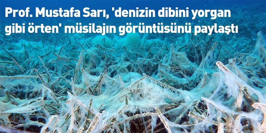 Prof. Mustafa Sarı, 'denizin dibini yorgan gibi örten' müsilajın görüntüsünü paylaştı