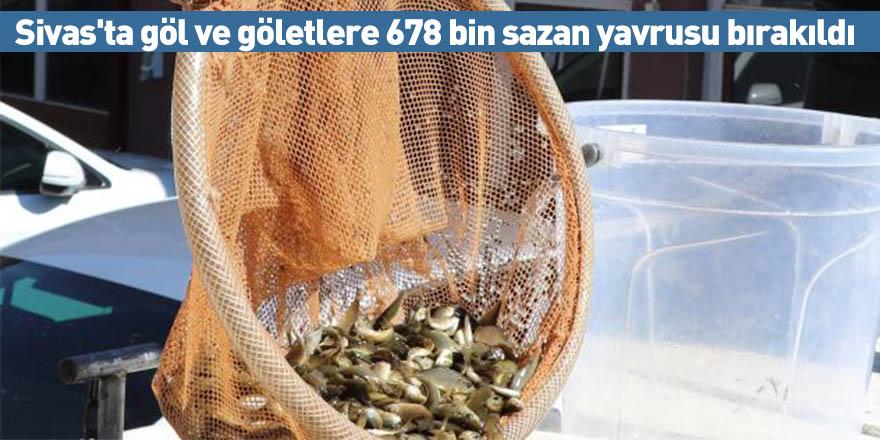 Sivas'ta göl ve göletlere 678 bin sazan yavrusu bırakıldı