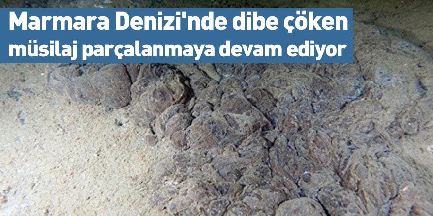 Marmara Denizi'nde dibe çöken müsilaj parçalanmaya devam ediyor