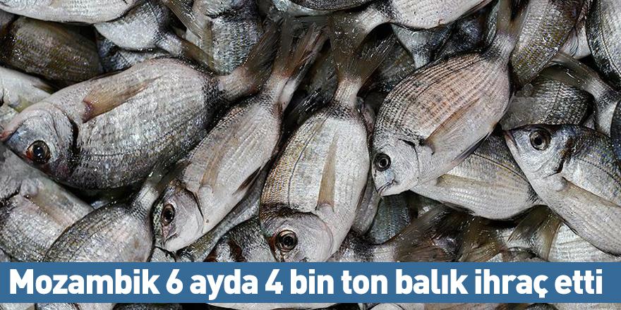 Mozambik 6 ayda 4 bin ton balık ihraç etti