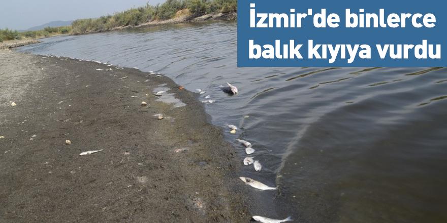 İzmir'de binlerce balık kıyıya vurdu