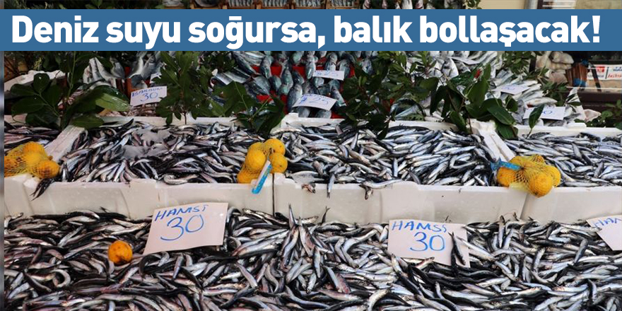 Deniz suyu soğursa, balık bollaşacak!