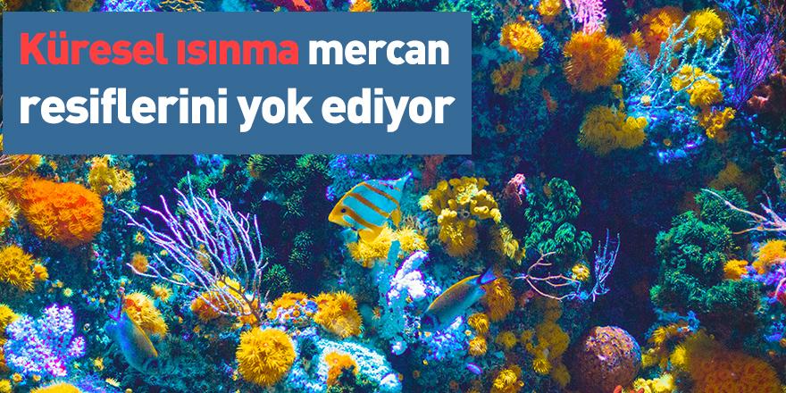 Küresel ısınma mercan resiflerini yok ediyor