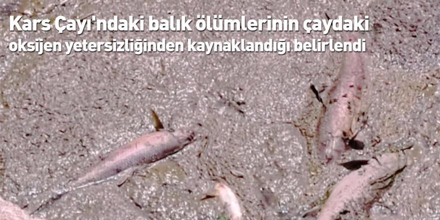 Kars Çayı'ndaki balık ölümlerinin çaydaki oksijen yetersizliğinden kaynaklandığı belirlendi