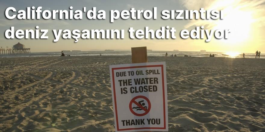 California'da petrol sızıntısı deniz yaşamını tehdit ediyor