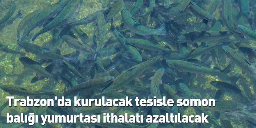 Trabzon'da kurulacak tesisle somon balığı yumurtası ithalatı azaltılacak