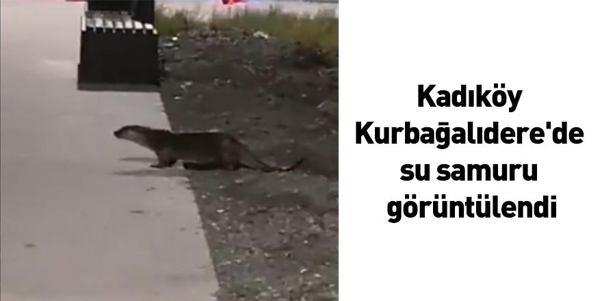 Kadıköy Kurbağalıdere'de su samuru görüntülendi