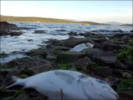 Isparta'da toplu balık ölümleri