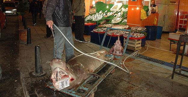 Marmara Denizi'nde köpek balığı yakalandı