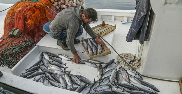 Palamutlar göç yolunda, balıkçılar tetikte