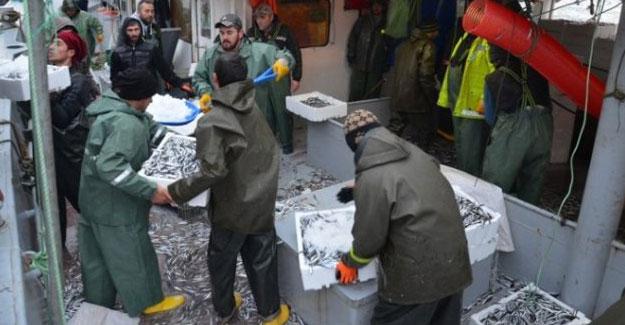 Karadenizli balıkçıların umudu hamside