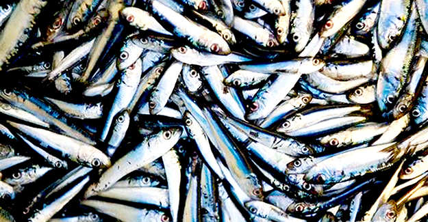 Tezgahlarda balık azaldı, fiyatlar tırmanıyor
