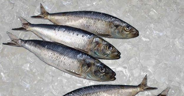 Balık tezgahlarında sardalye bereketi