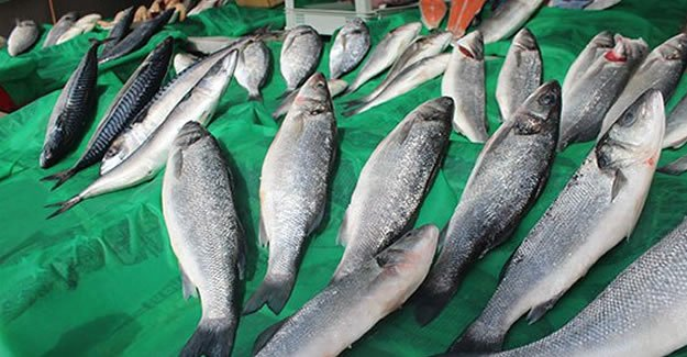 Balıklar azaldı, tezgahlar cep yakmaya başladı