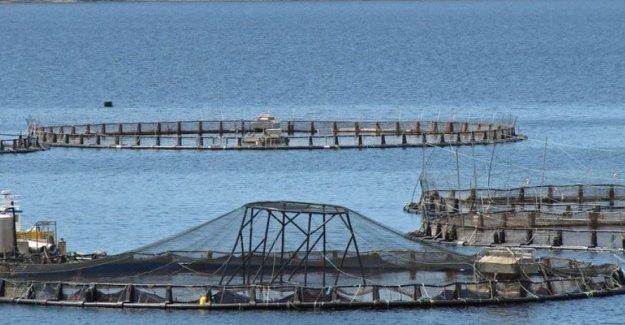 'Sinop turizmini balık çiftliğine feda edemeyiz'