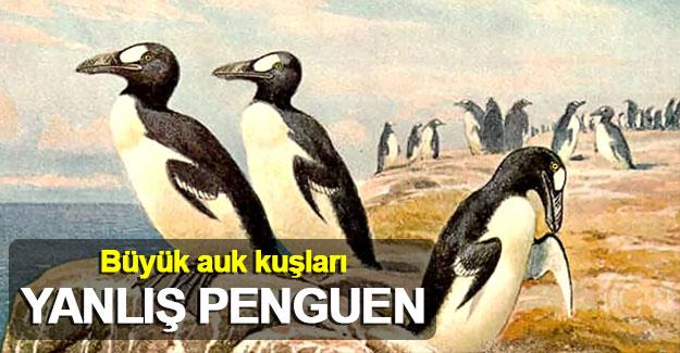 Büyük auk kuşları: Yanlış penguen