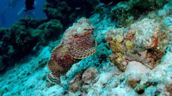 Okyanusların zehirli balıkları