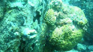 Mercanlar için risk büyüyor