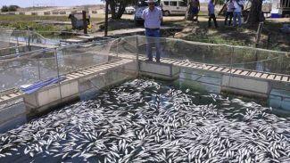 600 bin balık birden telef oldu