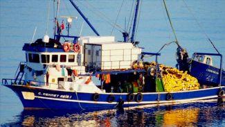 Bodrum'da binlerce balık telef oldu
