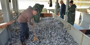 Karadeniz'de hamsi bereketi: 100 ton hamsi avlandı