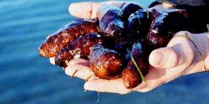 Deniz patlıcanı avı serbest bırakıldı